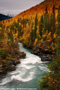 Six Mile Creek, Kenai Peninsula, Chugach National Forest, Alaska.