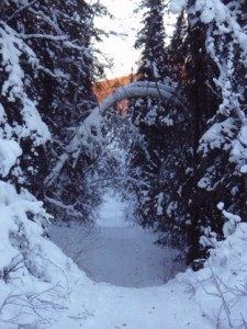 Dog sled trail in Goldstream Valley.