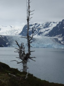 Harriman Fiord, Prince William Sound, AK