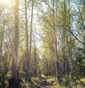 kimolsonphoto-anchorage-trail-spring